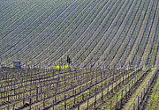 Big Wine Prints - Vineyard Print by Mats Silvan