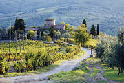 Chianti Landscape Prints - Vineyards and Farmhouse Print by Jeremy Woodhouse