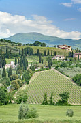 Tuscan Hills Photos - Vineyards on a Hillside by Rob Tilley