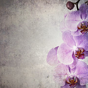 Grungy Photo Prints - Vintage orchids Print by Jane Rix