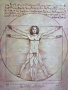 Pete Maier Metal Prints - Vitruvian Man Metal Print by Pete Maier