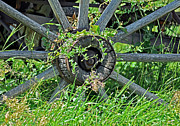 Entangled Photos - Wagon Wheel by Juls Adams