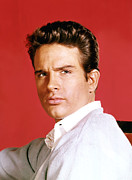 1960s Portraits Framed Prints - Warren Beatty, C. 1960s Framed Print by Everett