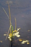 Water Plants Photos - Water scene by Heiko Koehrer-Wagner