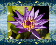 Flower Photos Photos - Water Star by Bell And Todd