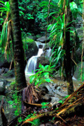 Bromeliads Glass - Waterfall El Yunque National Forest by Thomas R Fletcher