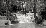 Woodland Photo Posters - Waterfall Poster by Setsiri Silapasuwanchai