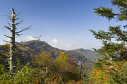 Blue Knob Mountain Prints - Waterrock Knob on Blue Ridge Parkway Print by Darrell Young
