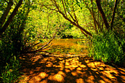 Walking Path Prints - Waters Edge Print by Cheryl Young