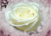 Twinkle Posters - Wedding Rose Collection  Poster by Debra     Vatalaro