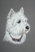 Pair Pastels - West Highland White Terrier  by Patricia Ivy