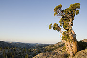 Mountain Art - Western Juniper On Granite Summit by Sebastian Kennerknecht