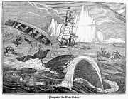 1833 Photos - Whaling, 1833 by Granger