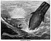 19th Century Photos - WHALING, 19th CENTURY by Granger
