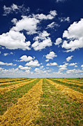 Yellow Prairie Photos - Wheat farm field at harvest in Saskatchewan by Elena Elisseeva