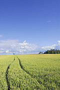 Outsides Art - Wheat field and blue sky by Lars Hallstrom