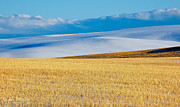 Ranch Photos - Wheat Field by Rachele Morlan