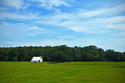 Natchez Trace Framed Prints - White Barn Blue Sky No. 1 Framed Print by Phil Brown