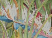 Bird Of Paradise Drawings - White Bird of Paradise by John Edebohls