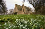 Flower Gardens Prints - White Flowers With A Small Church In Print by John Short
