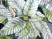 Flower Drawings Originals - White Poinsettia by Mindy Newman