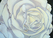 Ground Paintings - White Rose by Angie Coleman
