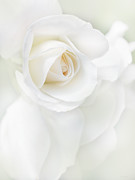 Macro Flower Prints - White Rose Petals Print by Jennie Marie Schell
