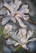 White Prints - White Star Magnolia Blossoms Print by Sharon Freeman