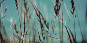Light Taupe Prints - Wild Grasses Print by Bonnie Bruno