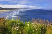 Waterfronts Prints - Wildflowers Along Yaquina Head Newport Print by Craig Tuttle