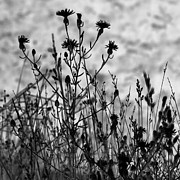 Flower Head Prints - Wildflowers Print by Blink Images