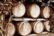 Wines Prints - Wine Barrels Print by Scott Pellegrin