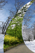 High Park Prints - Winter and Summer Print by Oleksiy Maksymenko