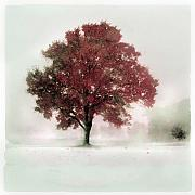 Gina Signore Digital Art - winter greets Autumn by Gina Signore