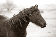 Mare Photo Originals - Winter Horse by Carl Deal