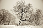Winter Park Metal Prints - Winter Park Tree Metal Print by Sean Cupp