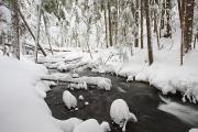 Snow-covered Landscape Posters - Winter Snow Along Still Creek In Mt Poster by Craig Tuttle