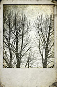 Wintry Posters - Winter trees Poster by Silvia Ganora