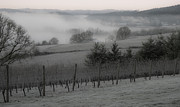 Pinot Posters - Winter Vineyard Poster by Jean Noren