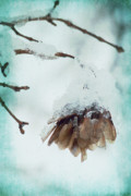 Cyan Prints - Wintertime Print by Angela Doelling AD DESIGN Photo and PhotoArt