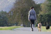 Dog Walking Posters - Woman walking with her dogs Poster by Mats Silvan