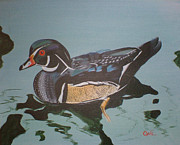 Wood Duck Painting Metal Prints - Wood Duck Metal Print by Charlie Brown