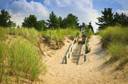 Boardwalk Posters - Wooden stairs over dunes at beach Poster by Elena Elisseeva