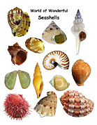 Seashell Digital Art Prints - World of Wonderful Seashells Print by Daniel Goodwin