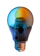 Energy Efficient Prints - X-ray Of An Energy Efficient Light Print by Ted Kinsman