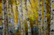 Marilyn Sholin Posters - Yellow Aspens Poster by Marilyn Sholin