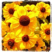 Picoftheday Posters - Yellow Flowers Poster by Luisa Azzolini