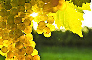 Sunlit Posters - Yellow grapes Poster by Elena Elisseeva