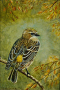 Framed Bird Prints Painting Prints - Yellow-rumped Warbler Print by David Tabor