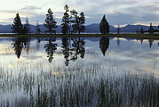 Fir Trees Photos - Yellowstone Lake At Dawn, Yellowstone by Raymond Gehman
